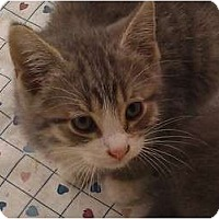 Adopt A Pet :: Pink Floyd - Troy, OH