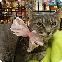 Adopt A Pet :: Deidre - The Colony, TX