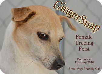 Feist Mix Dog for adoption in Richmond, Missouri - Ginger Snap