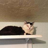 Adopt A Pet :: Love Bug - Coos Bay, OR