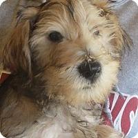 Adopt A Pet :: Pineapple - Salem, NH