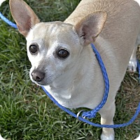 Adopt A Pet :: Pistachio - Meridian, ID