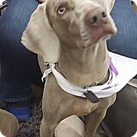 Adopt A Pet :: Zulli - Grand Haven, MI
