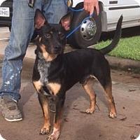 Adopt A Pet :: Wally - Houston, TX