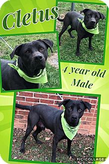 Terrier (Unknown Type, Medium) Mix Dog for adoption in Lexington, North Carolina - CLETUS
