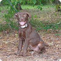 Adopt A Pet :: Lindy Lou 🌹 ADOPTED! - Saratoga Springs, NY