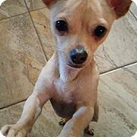Adopt A Pet :: Wally - springtown, TX