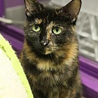 Adopt A Pet :: Regina - Herndon, VA
