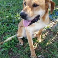 Adopt A Pet :: Marcus - Valley Falls, KS