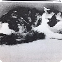 Adopt A Pet :: Lily - Windsor, CT