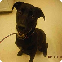 Adopt A Pet :: CARTER - Oroville, CA