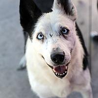 Adopt A Pet :: TIPPY - San Pedro, CA
