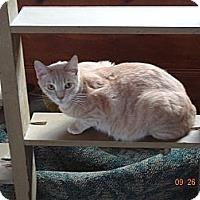 Adopt A Pet :: Bam Bam - Saint Albans, WV