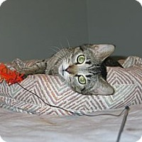 Adopt A Pet :: Mimi - West Dundee, IL