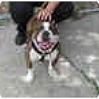 Adopt A Pet :: Hooch - Winder, GA