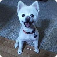 Adopt A Pet :: Striker - Council Bluffs, IA