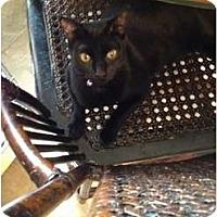 Adopt A Pet :: Jingles - Wenatchee, WA