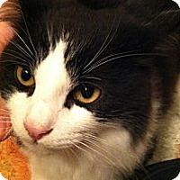 Adopt A Pet :: Moo Moo - lake elsinore, CA