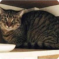 Adopt A Pet :: Puma - Warminster, PA