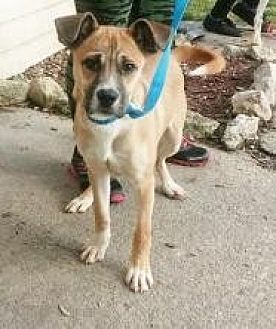 Boxer Mix Dog for adoption in Prestonsburg, Kentucky - carter