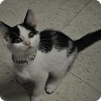 Adopt A Pet :: Michael - Rockaway, NJ