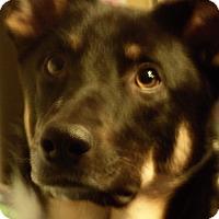 Adopt A Pet :: Sparky - Silver Lake, WI