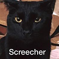 Adopt A Pet :: Screecher - Riverview, FL
