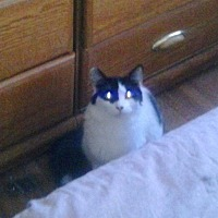 Adopt A Pet :: Millie - Lancaster, CA
