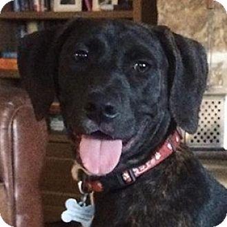 Hound (Unknown Type) Mix Puppy for adoption in Austin, Texas - Hansel
