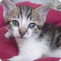 Adopt A Pet :: Pickle - Orlando, FL