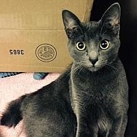 Adopt A Pet :: Hoovee - Del Rio, TX
