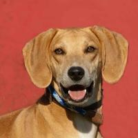 Adopt A Pet :: Smiley *Graduate* - Glen Allen, VA