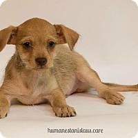 Adopt A Pet :: ZEPPY ZEPPLIN - Modesto, CA