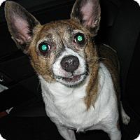 Adopt A Pet :: Buddy - Salem, OR