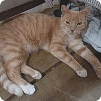 Adopt A Pet :: Sir Peaches - Calimesa, CA