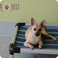 Adopt A Pet :: Tarja - Agoura Hills, CA