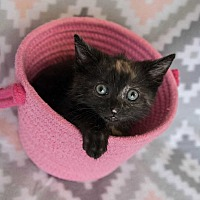 Adopt A Pet :: Queue - Muskegon, MI
