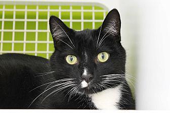 Adopt A Pet :: Talladega  - Troy, MI