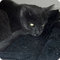 Adopt A Pet :: Clyde - Sterling Hgts, MI
