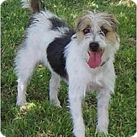 Adopt A Pet :: REMINGTON STEELE - Phoenix, AZ