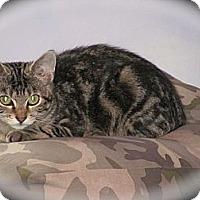 Adopt A Pet :: Casey - Oxford, CT