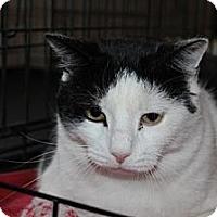 Adopt A Pet :: Loki - Westfield, MA
