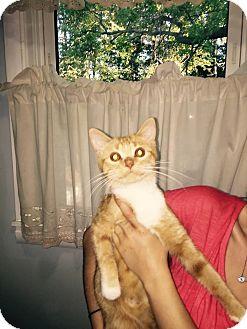 Domestic Shorthair Kitten for adoption in Kalamazoo, Michigan - Princess