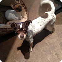 Adopt A Pet :: Baby todd - Simi Valley, CA