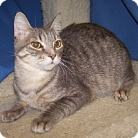 Adopt A Pet :: K-Ls5-Lucho - Colorado Springs, CO