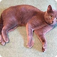 Adopt A Pet :: Barry - Merrifield, VA