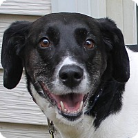 Adopt A Pet :: Suzy - North Olmsted, OH
