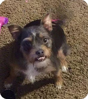 Terrier (Unknown Type, Small) Mix Puppy for adoption in Austin, Texas - Banjo in Sulphur Springs