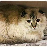 Adopt A Pet :: Chara - Gilbert, AZ