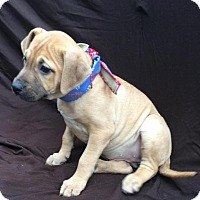 Adopt A Pet :: Gwen - East Sparta, OH